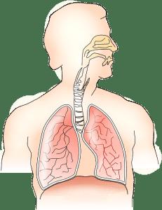 נשימה בריאה® האם אכן כמה שיותר יותר טוב