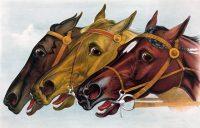 נחירות של סוס
